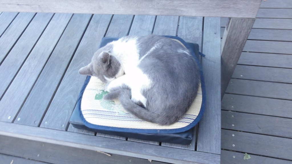 Enoshima Cat Sleeping