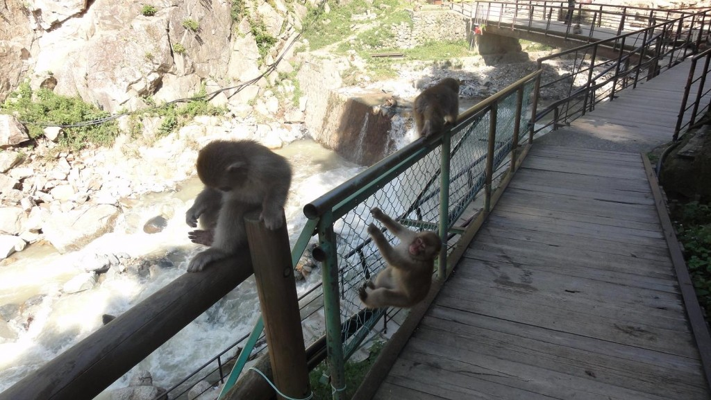 Jigokudani Monkeys Climbing Fence