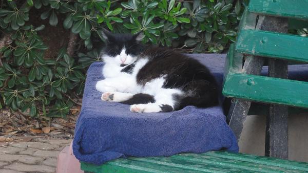 Sliema Cat